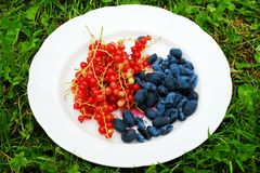 Red currant and honeysuckle berries in the plate. Red currant and honeysuckle berries in the white plate Stock Photo