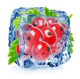 Red currant in ice Stock Photography