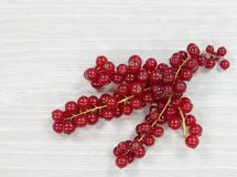 Red currant isolated royalty free stock photography