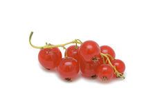 Red currant, isolated Stock Photos