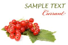Red currant isolated over white Royalty Free Stock Photo