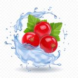 Red currant isolated in water splash realistic berry icon.  royalty free illustration