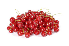 Red currant. Isolated on white background royalty free stock photos