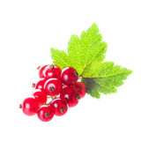 Red currant isolated Stock Photos