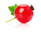 Red currant isolated on the white background Royalty Free Stock Images