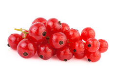 Red Currant  isolated on white Royalty Free Stock Photography