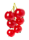 Red currant isolated on the white background Royalty Free Stock Image