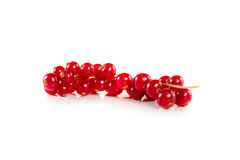 Red Currant isolated on a white background Stock Images