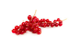Red Currant isolated on a white background Royalty Free Stock Photo