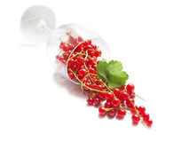 Red currant. Isolated wineglass with red currant on white background Royalty Free Stock Images