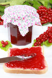Red currant jam Royalty Free Stock Image