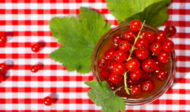 Red currant jam Stock Image