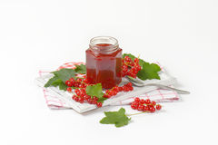 Red currant jelly Stock Image