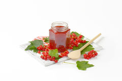 Red currant jelly Stock Images