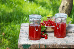 Red currant jelly in preserving glass Stock Photography