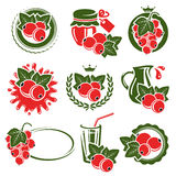 Red currant labels and elements set. Vector Stock Photos
