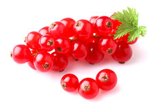 Red currant with leaf Royalty Free Stock Photo