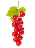 Red currant with leaf Stock Photo