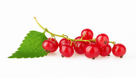 Red Currant with leaf Stock Photography