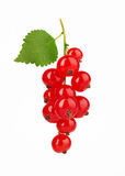 Red Currant with leaf Stock Images