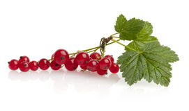 Red currant. With leaf isolated on white background royalty free stock photos