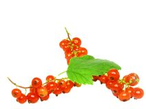 Red currant with leaf on white. Isolated. Royalty Free Stock Images