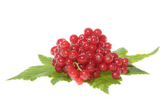 Red currant with leafs Stock Image