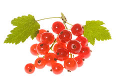 Red currant with leafs Royalty Free Stock Photography