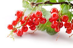 Red currant with leaves on branch Royalty Free Stock Image