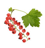 Red Currant With Leaves Stock Images