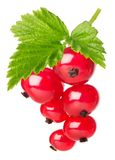 Red currant with leaves Royalty Free Stock Photography
