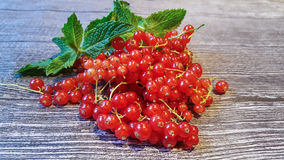 Red currant. And mint Stock Images