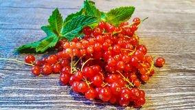 Red currant. And mint Royalty Free Stock Image