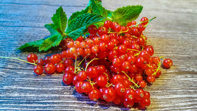 Red currant. And mint Royalty Free Stock Photos