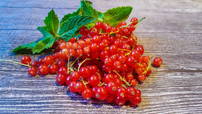 Red currant. And mint stock photo