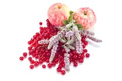 Red currant, mint and  apples Stock Photos