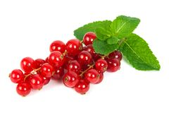 Red currant. On mint isolated on a white background Royalty Free Stock Photography