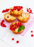 Red Currant Muffins Stock Photos