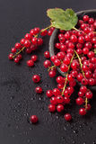 Red currant over black Royalty Free Stock Image