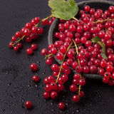 Red currant over black Stock Photos