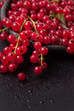 Red currant over black Stock Photo
