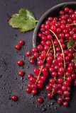 Red currant over black Royalty Free Stock Photo