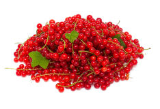 Red currant. Over white background royalty free stock images
