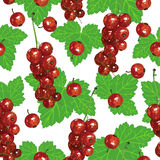 Red currant pattern seamless Stock Photos