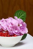 Red currant and pink flowers Stock Photo