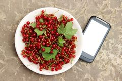 Red currant in plate and smartphone with white screen mock up on stone countertop, top view, copy space. Technology Internet in ag. Riculture. Applications for Royalty Free Stock Images