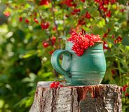 Red currant in a pot. On a stump in the garden stock photo
