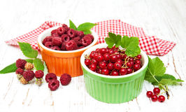 Red currant and raspberries Stock Photography