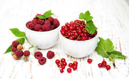 Red currant and raspberries Stock Image