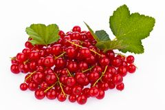 Red currant - red currant Royalty Free Stock Image